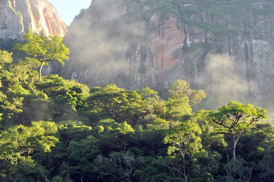 Bolivien Amboro Nationalpark Regenwald
