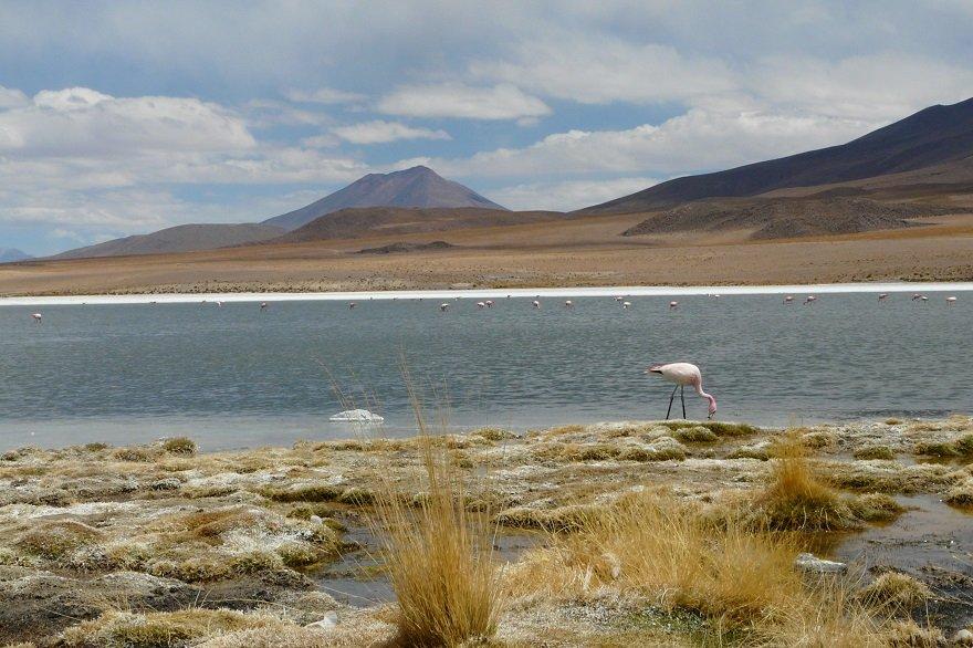 Bolivien Altiplano Laguna Canapa