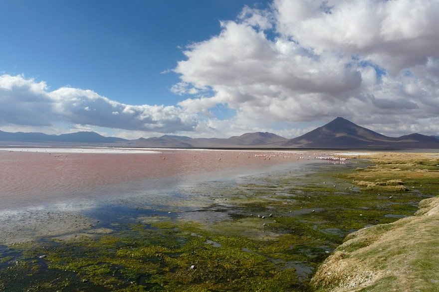 Bolivien Altiplano Laguna Colorada