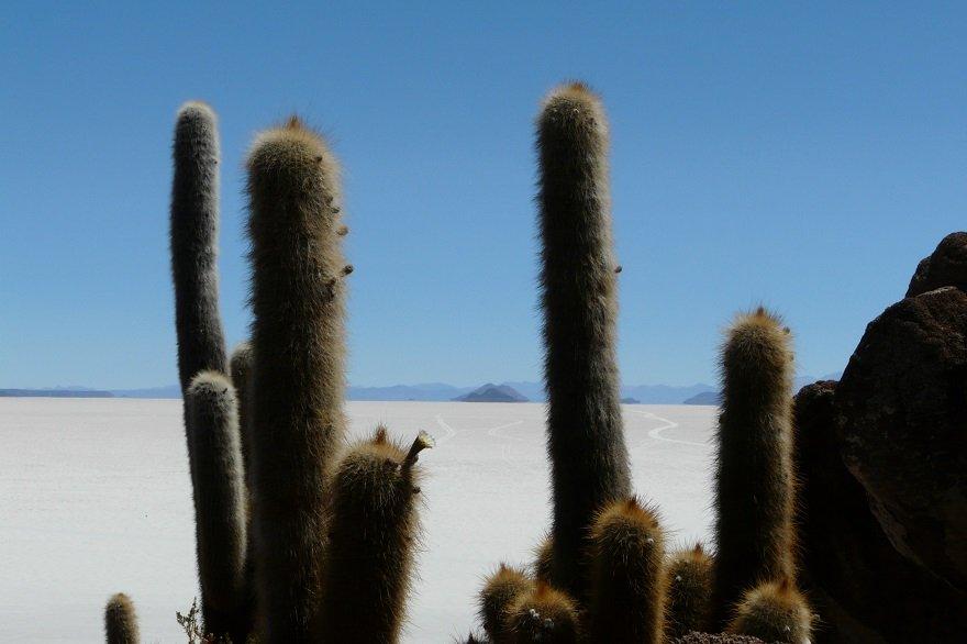 Bolivien Salar de Uyuni Isla Incahuasi
