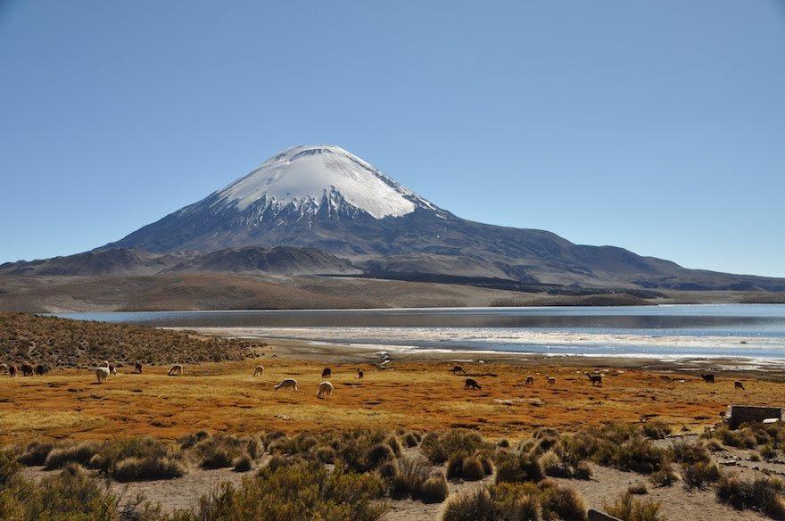 Lauca Nationalpark Altiplano Anden Chile Lago Chungará