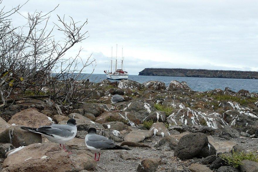 Ecuador Galapagos Insel North Seymour