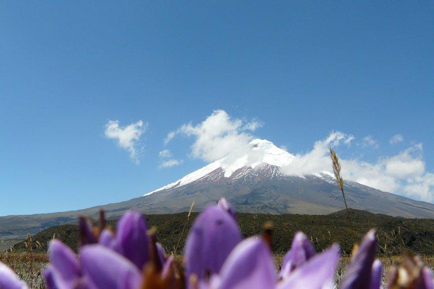 Ecuador Straße der Vulkane Cotopaxi Blüten