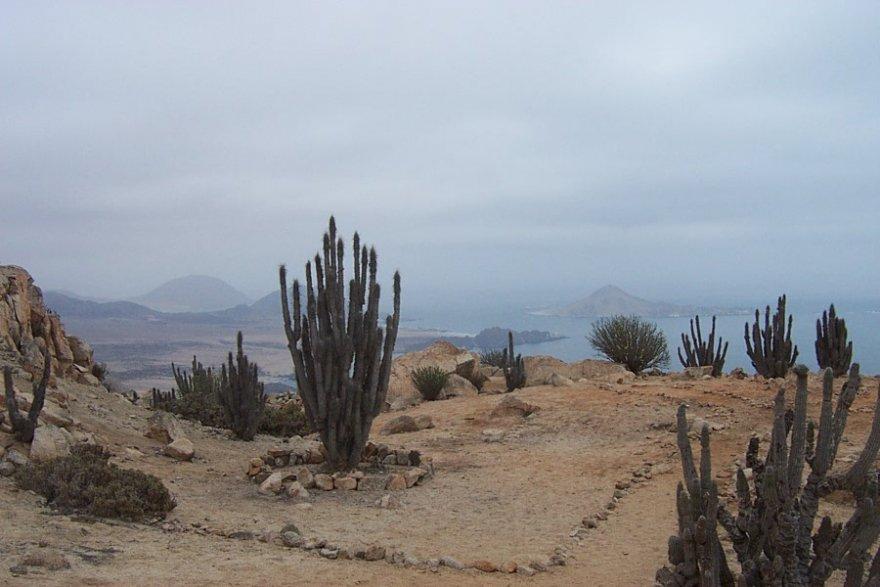 Nationalpark pan de Azúcar chile kleiner norden