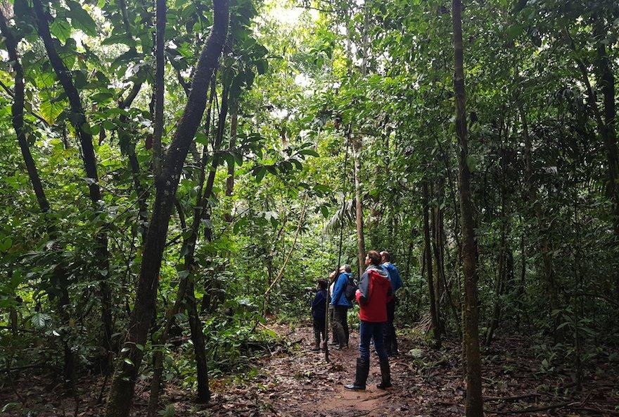 Peru Amazonas Puerto Maldonado Regenwald