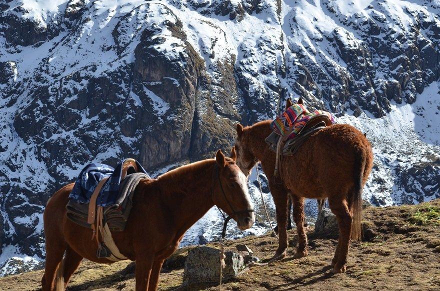 Peru Anden Pferde Schnee