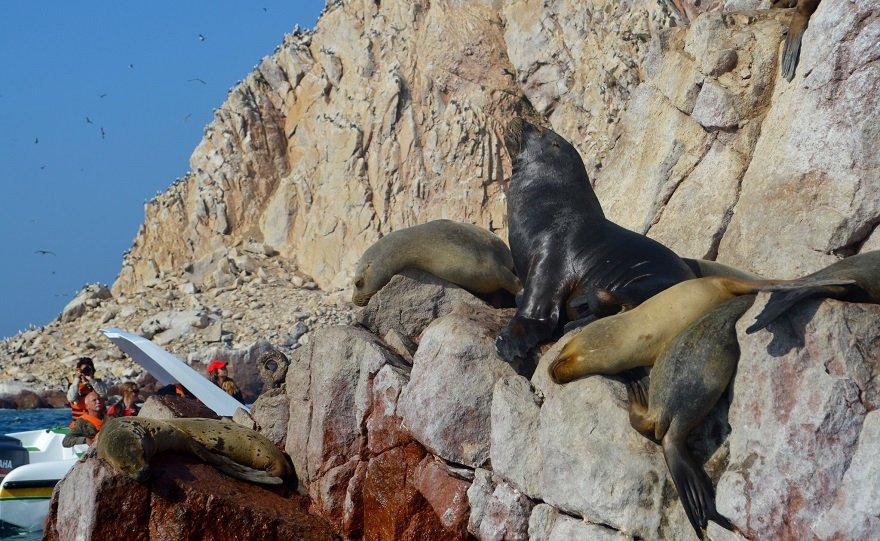 Peru Südküste Paracas Ballestas Inseln