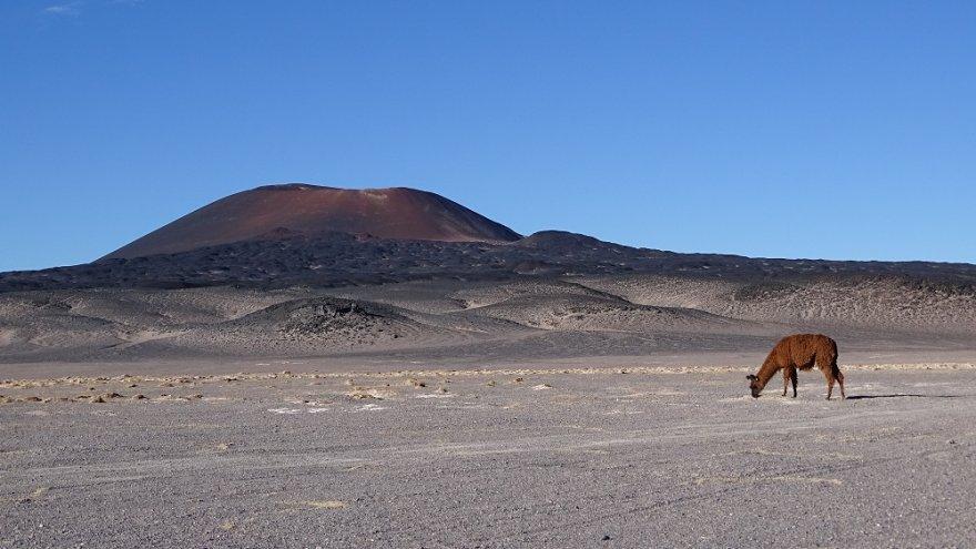 Vulkan Carachi Pampa Puna Anden Argentinien