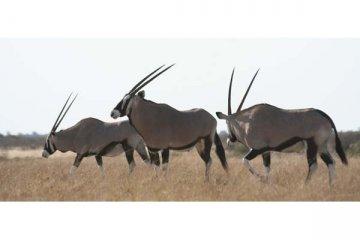 Kalahari Camping Safari