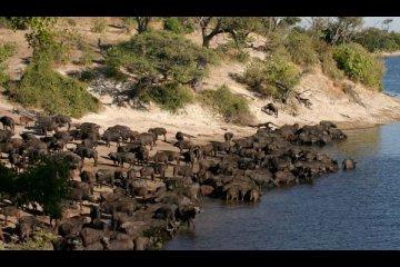 Die Lion Camping Safari
